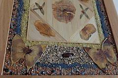 Obrázky - Motýľ - 6366717_