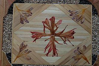 Obrázky - Vianočný kaktus - 6366937_