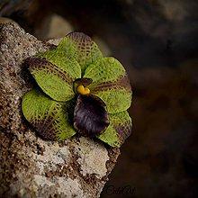 """Dekorácie - Orchidea """"purpurová zeleň"""" - sada 4 dekoračných kvetov - 6451970_"""