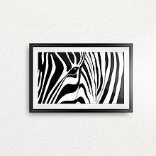 Grafika - Zebra zebrovaná - 6457326_