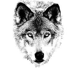 Materiál ručne robený - Vlk - nažehlovačka - 6479575_