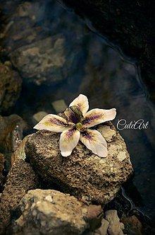 Obrazy - Biela orchidea II. - séria obrazov na plátne - 6505524_