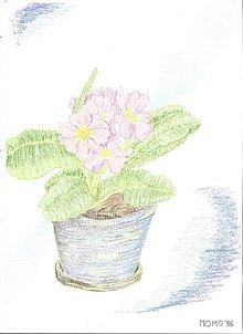 Obrazy - Kvetiny -- prvosienka - 6537454_