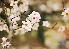 Grafika - Príroda ožíva - 6563048_
