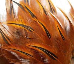 Suroviny - 1-2*32 Oranžové pierka s čiernou špičkou- krátke /stredne dlhé-výrazná špička- 2ks - 6578751_