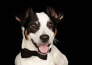 Pre zvieratká - Motýlik pre psíka - 6615124_