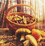 - S650 - Servítky - huby, hríby, košík, les - 6638952_