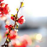 Fotografie - Nesmelé lúče - 6644058_