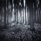 Obrazy - Ghostlines IX - 6646782_