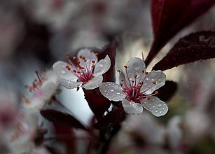 Fotografie - Impresie zo záhrady - 6655325_