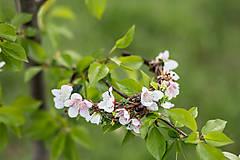 Ozdoby do vlasov - výpredaj z 26 eur Kvetinová jarná čelenka