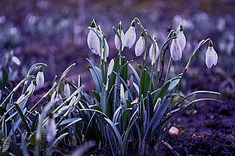 Fotografie - snežné žienky - 6683614_