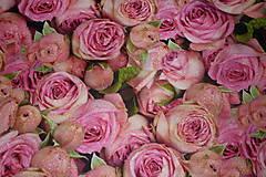 - Ruže digi - 6715601_
