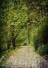 Grafika - Ticho v parku - 6729093_