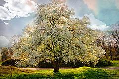 Obrazy - ROZKVITNUTÝ DO KRÁSY fotoplátno 70x50 cm - 6759633_