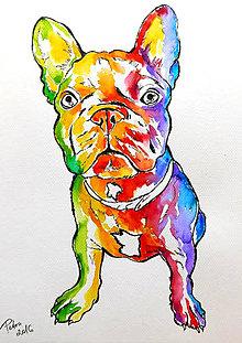 Obrazy - Akvarelová maľba - Dúhový havkáč - 6769365_