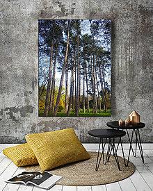 Obrazy - ŠTÍHLE KRÁSAVICE fotoplátno 40x60 cm - 6793725_