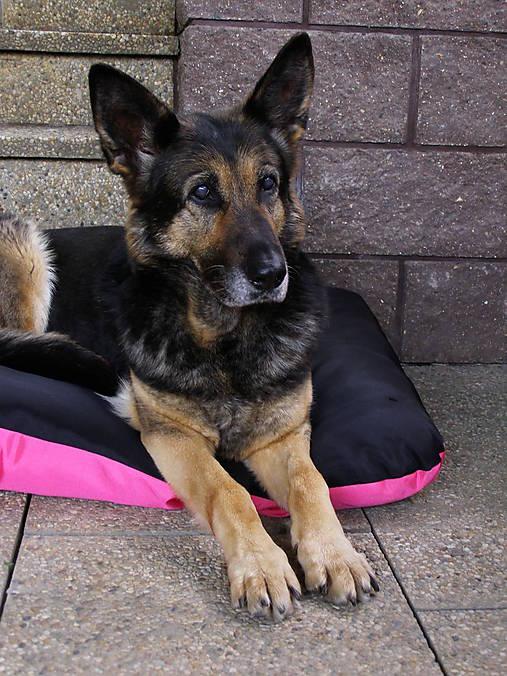 Pelech pre psa z vodeodolnej látky, ružovo-čierny, 70 x 100 cm