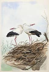 Obrazy - Bociany - akvarel - 6802334_