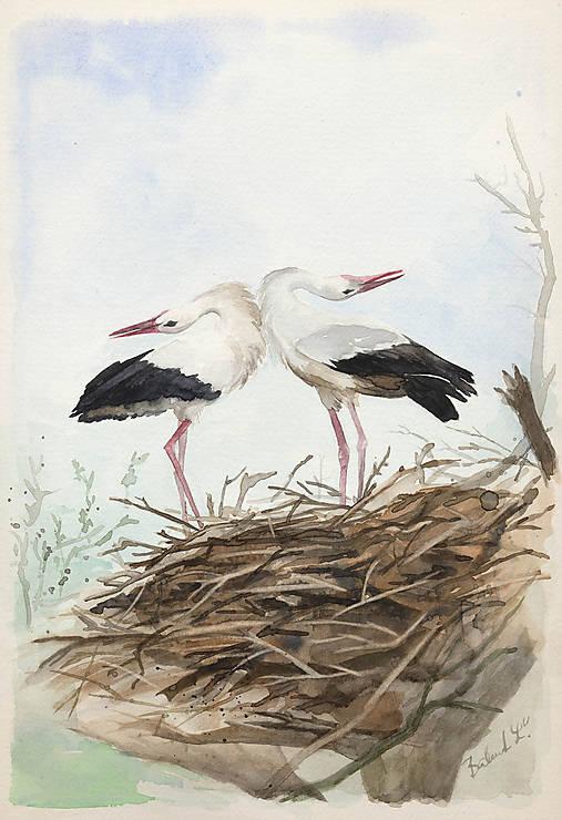 Bociany - akvarel