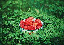 Obrazy - Z mamičkinej záhradky  - 6820671_