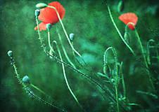 Obrazy - Tanec s vetrom - 6824048_
