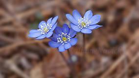 Obrazy - Modrá jar - 6844982_