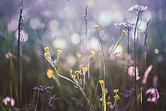 Obrazy - Celestial Summer XI - 6907570_