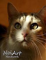 Fotografie - Nela pozerá na svetlo - 1119708