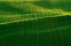 Fotografie - Poľná diaľnica - 1238305