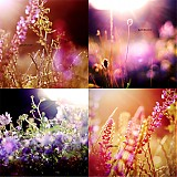 Fotografie - Romance melody - 1258832
