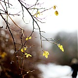 Fotografie - Kúsok neba. - 1258895