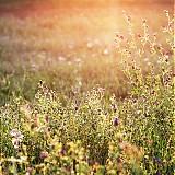 Fotografie - Zaliate slnkom - 1258922