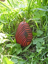Dekorácie - RED tiger pear - 1278720