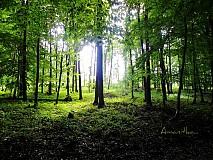 Fotografie - sama v lese - 1332613