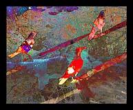 Grafika - Havraníci sú osobnosti - 1364608