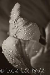Fotografie - ...po daždi... - 1371394