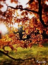 Fotografie - Autumn - 1420391