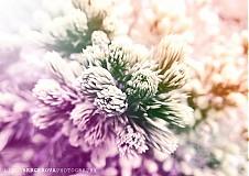 Fotografie - Print A4 - Dream Garden  - 1421700