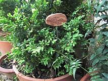 Dekorácie - Menovky na bylinky - 1459945