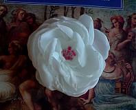 biela kráska-2...