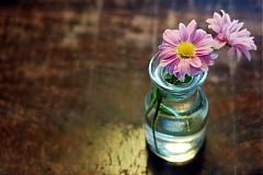 Fotografie - Ružová chryzantéma vo váze na drevenom stole - 148462