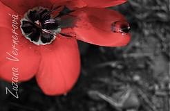 Fotografie - Aj kvety plačú - foto plus rámik - 1560660