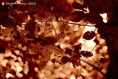 Fotografie - V lese, v lístí, ukryté .... - 1579975