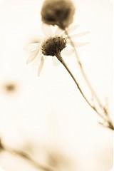 Fotografie - Purity  - 1616853