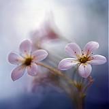 Fotografie - letná - 1660676