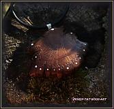 Náhrdelníky - Náhrdelník ...Dubový kontinent světla... - 1676674
