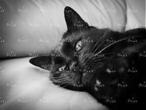 Fotografie - wake up - 1762822