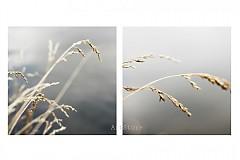 Fotografie - Nostalgicky pri vode - 1801408