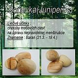 Iné doplnky - Borievka (Juniperus) - 1894500